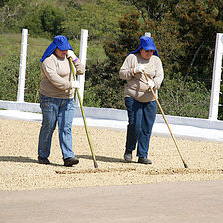 kaffeeaufbereitung-1577b85864a302